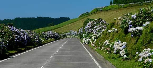 bloemen berg