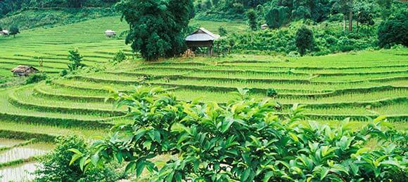 natuur in indonesie