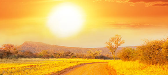 wildlife namibie