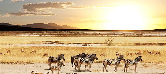 bezienswaardigheden namibie