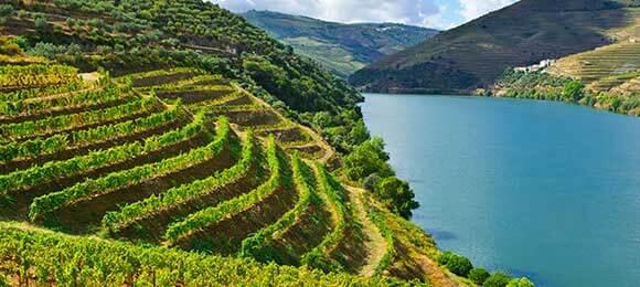 douro wijnvelden