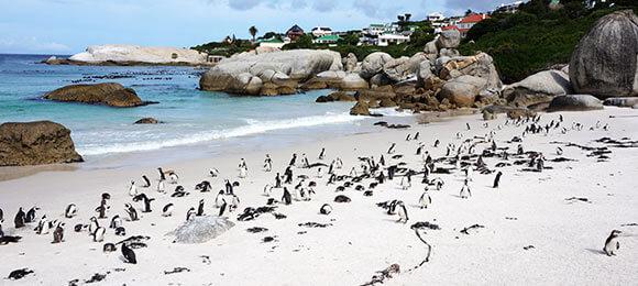 strand in zuid-afrika