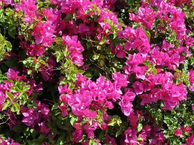 botanische tuin kreta