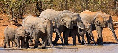 olifanten safari zuid afrika